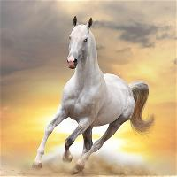 vnvn-web-design-galloping-horse