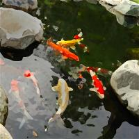 vnvn-web-design-koi-pond-with-sky
